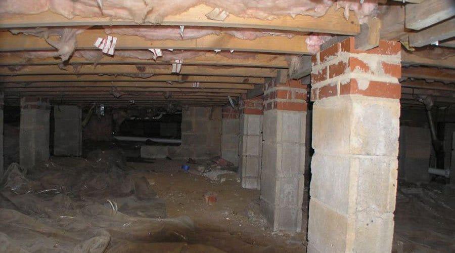 Service de dératisation vide sanitaire - éliminer les souris et rats